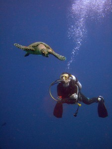 Fun dive turtle