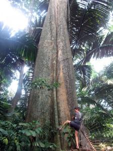 Jungle trek Tioman