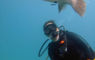 Fun dive porcupine fish