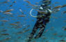 Fun dive School of fishs